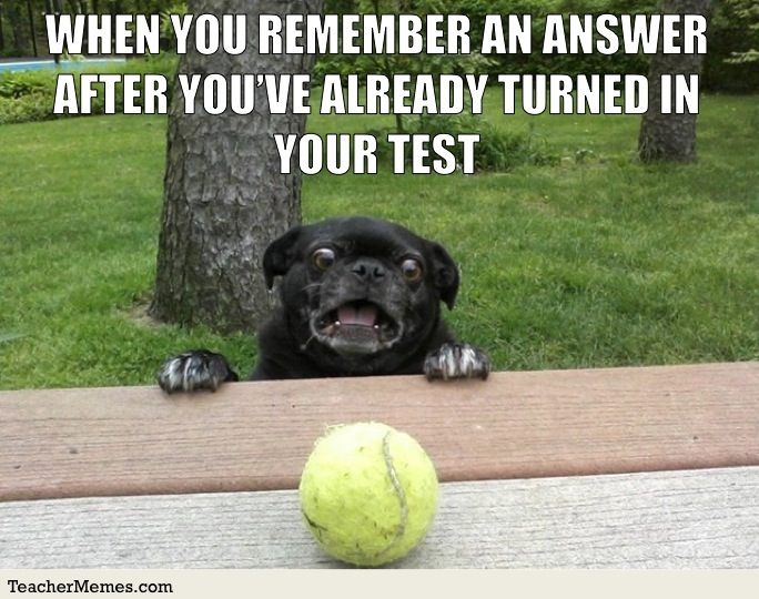Meme of dog looking at a ball